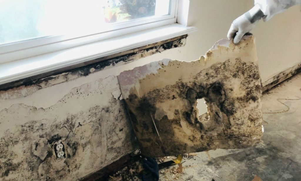 Mold can make you sick bio restorarion