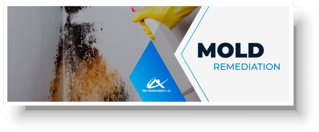 Mold-Remediation-Orlando-Bio-Restoration